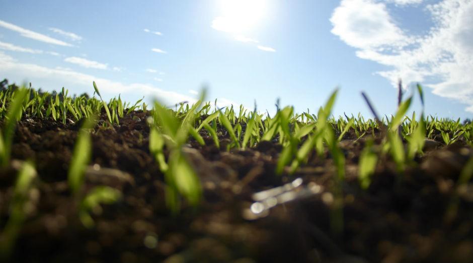 Sustentabilidade: parcerias para troca de experiências (Foto: Pexels)