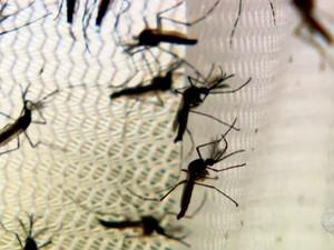 Dengue Salvador Bahia (Foto: Reprodução/TV Bahia)
