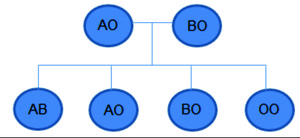 Figura 2: cruzamentos possíveis relativos ao sistema ABO (Foto: Colégio Qi)