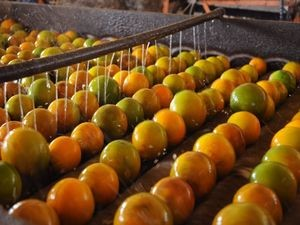 Suco de laranja se destaca na exportação (Foto: Edinah Mary/Seides)
