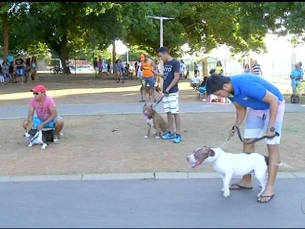 Objetivo do encontro é mostrar que raça pode ser dócil  (Foto: Reprodução/TV Anhanguera)