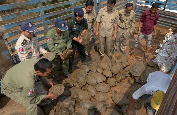 Camboja confiscou carga de 102 tartarugas e 17 serpentes píton (Foto: Tang Chhin Sothy/AFP)