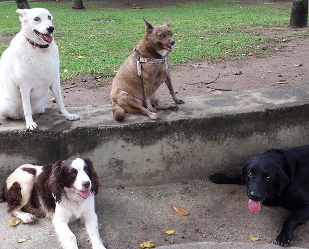 Alguns dos cachorros adotados por Monica (Foto: Arquivo Pessoal)