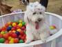 Cachorros fofos bombam na web; confira lista com fotos!