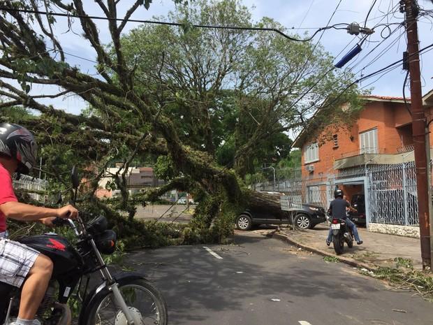 Centenas de árvores caídas interditaram ruas em Porto Alegre (Foto: Diego Guichard / G1)