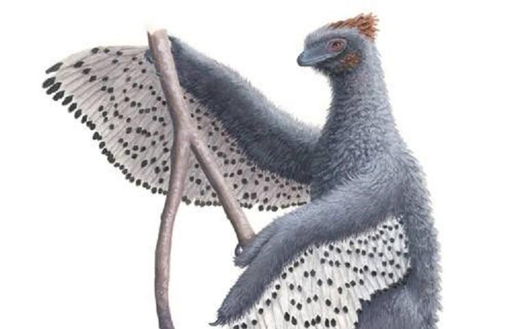 """Representação do """"dinossauro fofinho"""" (Foto: Bristol University)"""