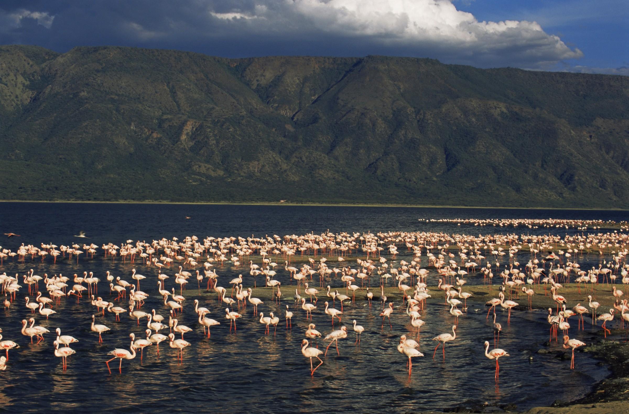 Lago Natron é paraíso de veraneio para os flamingos (Foto: NASA/Creative Commons)
