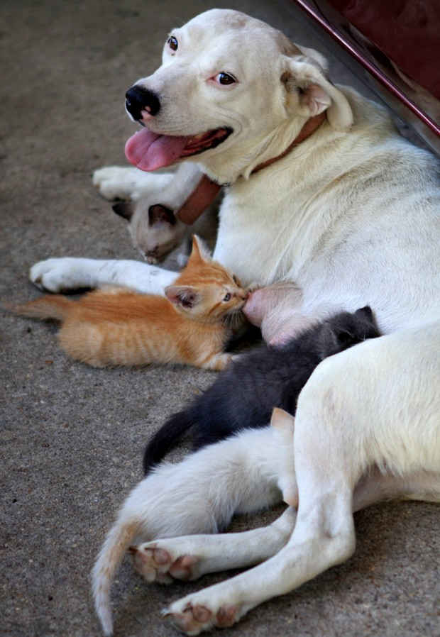 Cachorra Molly alimenta gatos em Columbia, no Alabama (Foto: The Dothan Eagle, Max Oden/AP Photo)
