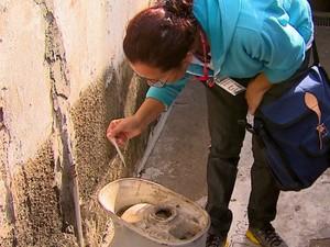 Agentes vão percorrer 2,4 mil imóveis de Rio Claro à procura de criadouros do mosquito (Foto: Reginaldo dos Santos/EPTV)