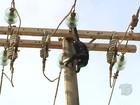 Macaco é eletrocutado ao ficar preso em rede elétrica na BR-163; veja vídeo