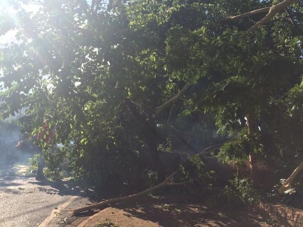 Parte da árvore ficou no meio da rua (Foto: Graciela Andrade/TV TEM)
