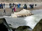 Moradores observam baleia de 15 metros morta em praia na Dinamarca