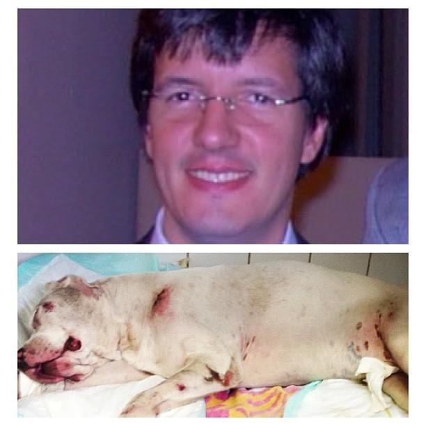 Thaila Ayala e Fernanda Paes Leme postam imagem do pitbull de Luize Altenhofen e do homem que agrediu o cachorro (Foto: Reprodução/ Instagram)
