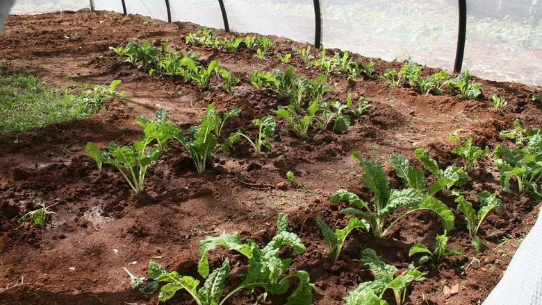 horta-hortifruti-orgânico (Foto: CDC Global/CCommons)