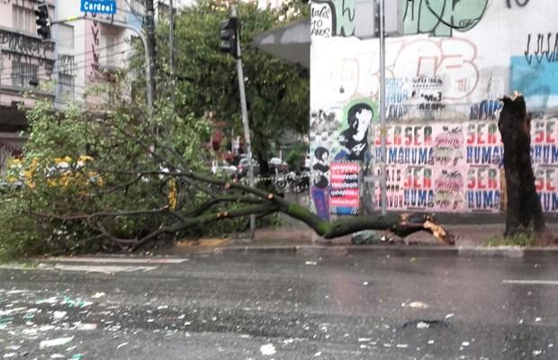 Árvore caiu na Rua Cardeal Arcoverde, em Pinheiros (Foto: Paula Paiva Paulo/G1)
