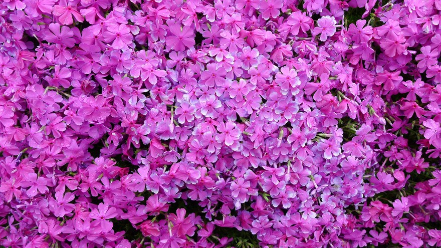 Flores5 (Foto: Reprodução/Youtube)