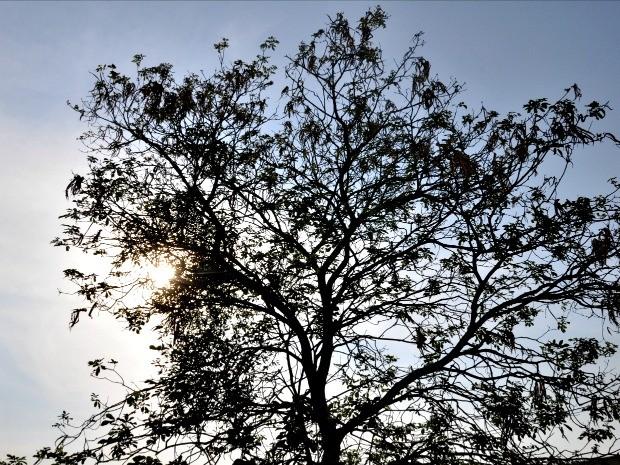 Sol intenso em Campo Grande nesta quarta-feira (7) (Foto: Isabela Cavalcante/G1 MS)