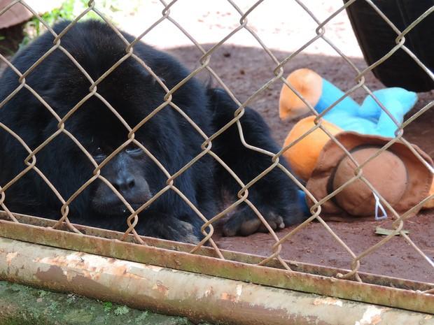 Bugio, chamado Remi, ganhou um ursinho novo de presente (Foto: Stephanie Fonseca/G1)