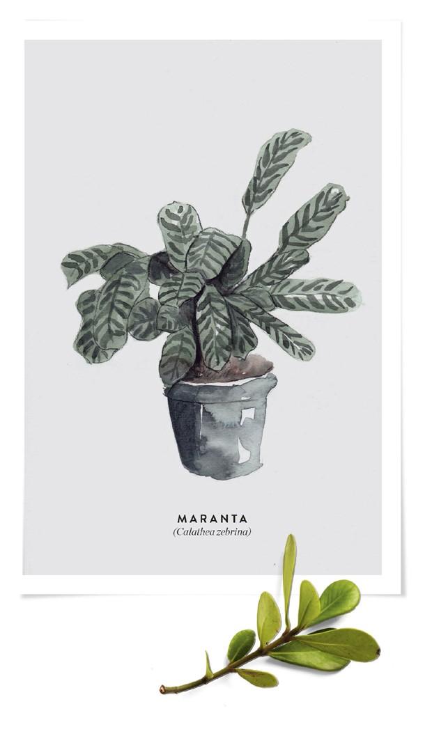 Manual de jardinagem (Foto: Iara Venanzi/ Editora Globo | Ilustrações Mary Cagnin)