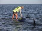 Mais de 100 baleias morrem encalhadas na Nova Zelândia