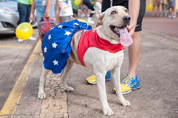 Envie fotos do seu cãozinho fantasiado para o 'Cão Superstar'  (Foto: Rodrigo Oliveto)
