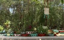 Moradores transformam lixo em jardim