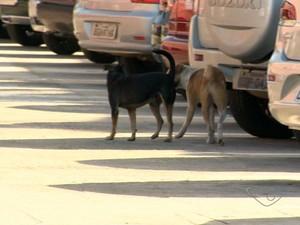 Cachorros ficam na rua do Hospital São Lucas, em Vitória (Foto: Reprodução/TV Gazeta)