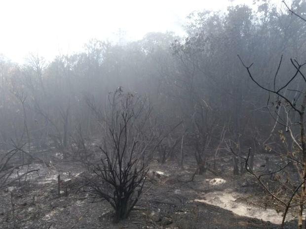 Ainda não há informações da área que já foi detsruída pelo fogo (Foto: André Luis Pennycook/Acervo pessoal)