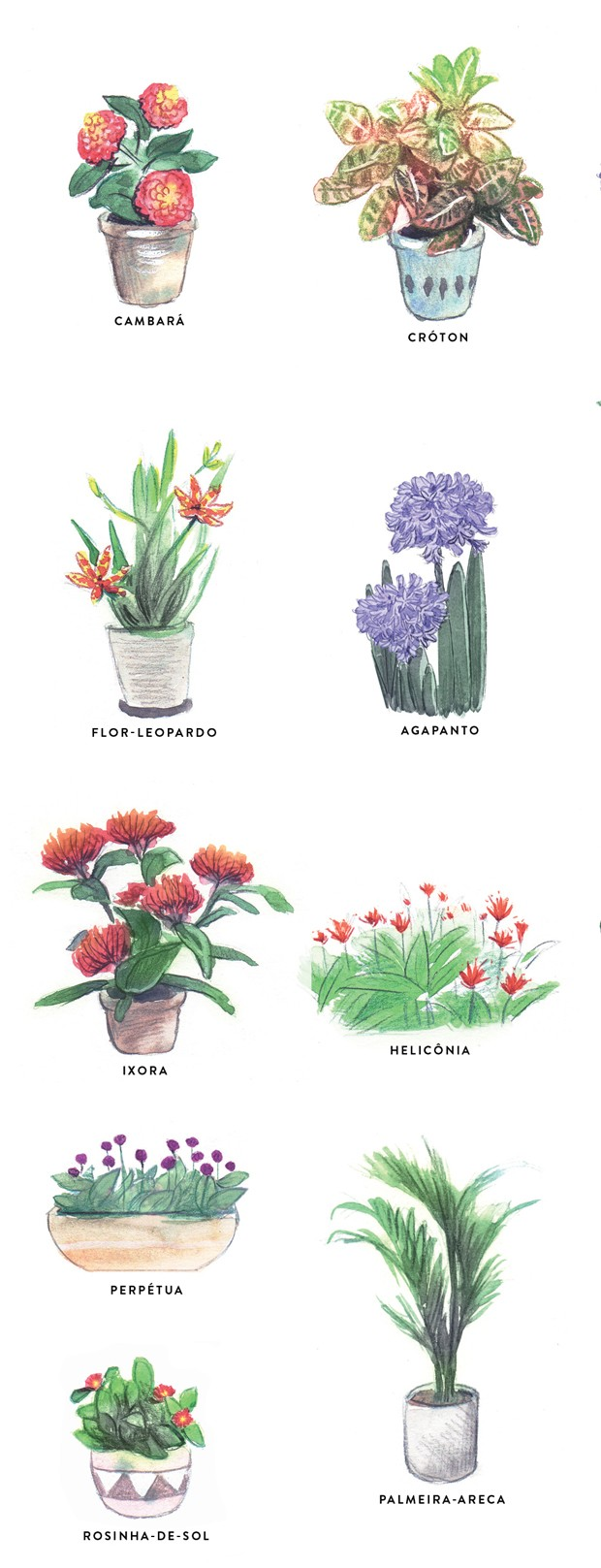 Plantas que adoram banho de sol (Foto: Ilustração Mary Cagnin)