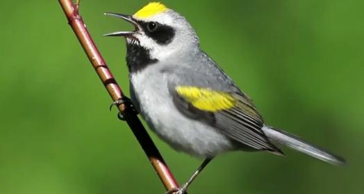 aves lindas, raras e exclusivas (Reprodução TV Globo)