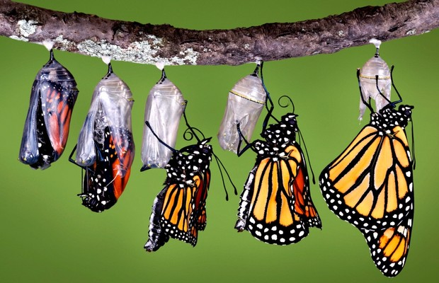 borboleta; mudança; falência; recuperação (Foto: ThinkStock)