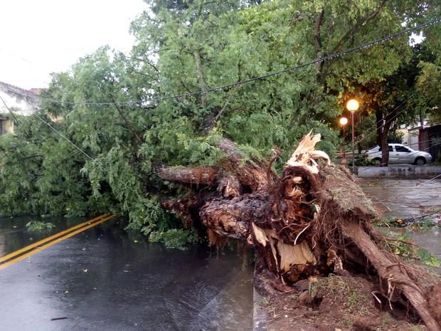 Árvore interditou rua no Jardim Dindinha em Jacareí (Foto: Vanguarda Repórter/Caymi Guedes)