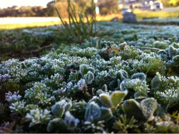 Paisagem amanheceu coberta pelo gelo em Ponta Grossa  (Foto: Flavio Bernardes / RPC TV)