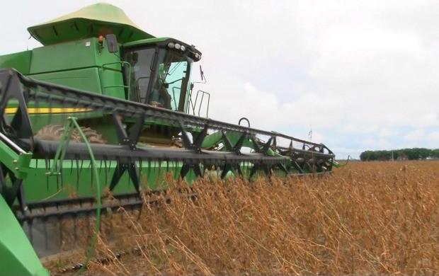 Colheita de soja em Vilhena, Ronônia (Foto: Bom Dia Amazônia)