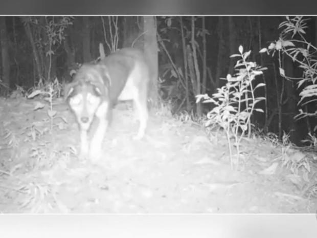 Cão é flagrado durante a noite passeando pela mata (Foto: Reprodução/TV TEM)