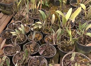 Pesquisa de vegetais foi realizada no Reino Unido (Foto: Reprodução/TV Fronteira)