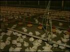 Falta de energia frequente prejudica criadores de frango do PR