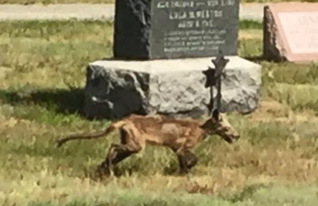 Animal misterioso é flagrado rondando cemitério nos EUA (Foto: Merrimack Police Department/Facebook)