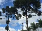 Curitiba tem o maio mais frio dos últimos dez anos, segundo o Simepar