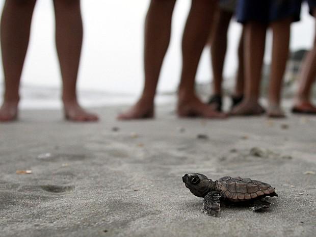 Tartaruga Carolina do Sul (Foto: Randall Hill/Reuters)