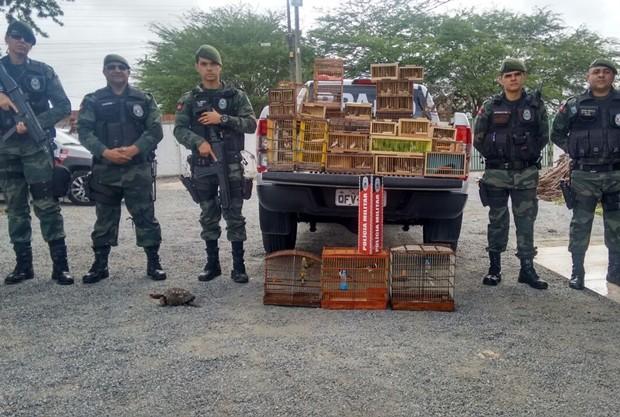 Mais de 100 animais silvrestres foram resgatados na Feira da Prata, em Campina Grande (Foto: Major Cristóvão Lucas/BPAmb)