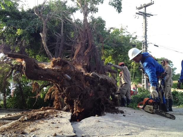 Falta de poda e fortes chuvas podem ter causado o acidente  (Foto: Walter Paparazzo/G1)