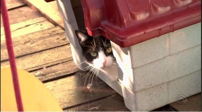 Casa de cachorro virou lar de um gatinho (Foto: Reprodução/RBS TV)