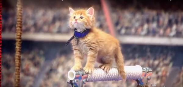 Gatos ganham torneio inspirado nos Jogos Olímpicos (Foto: Reprodução / YouTube)