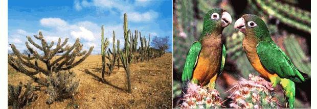 Flora e fauna da Caatinga (Foto: Reprodução)