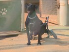 SSP registra 9 maus-tratos a animais desde 2015; ONGs apontam 5 por dia