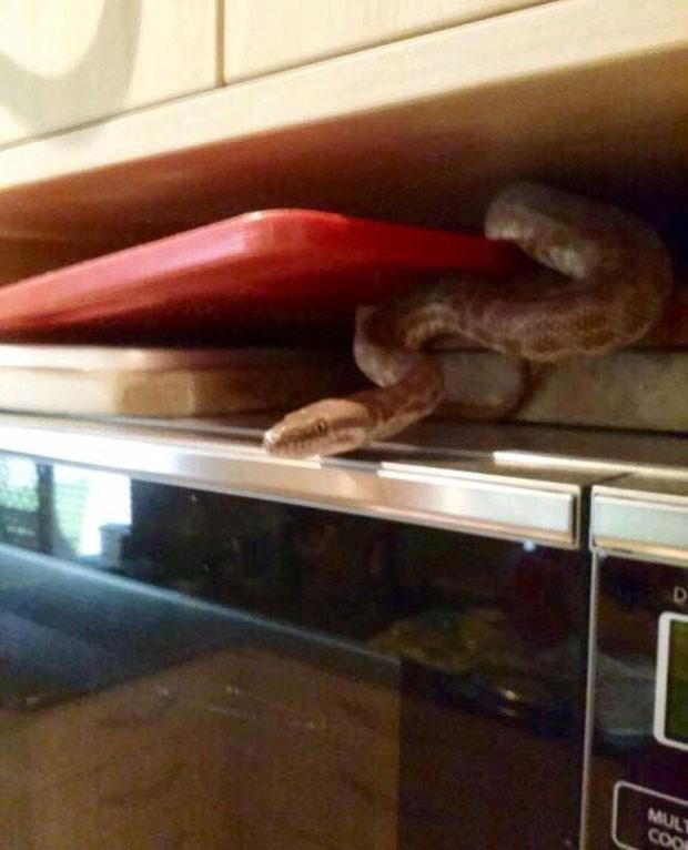 Família australiana levou susto ao se deparar com píton em cima do micro-ondas (Foto: Reprodução/Facebook/Sunshine Coast Snake Catchers)