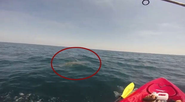 Tubarão 'rebocou' pescador por mais de duas após ser fisgado na costa da Flórida (EUA) (Foto: Reprodução/YouTube/TeamRebel FishingTv)