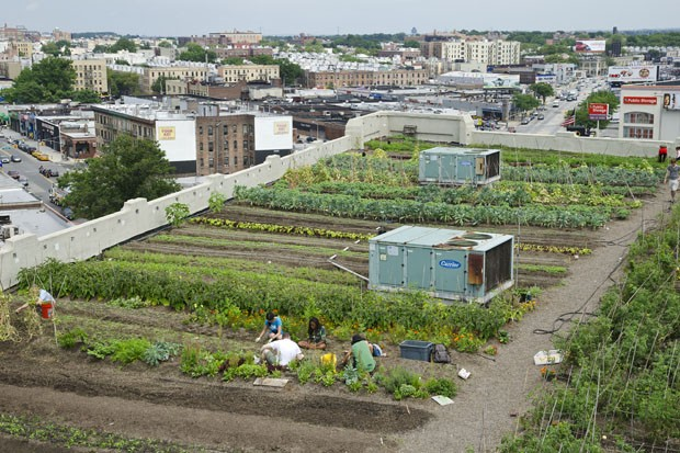 No topo do edifício de Queens, uma centena de canteiros produzem verduras orgânicas (Foto: Haroldo Castro/ÉPOCA)