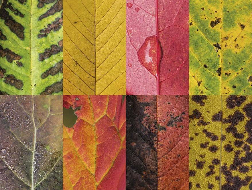 folhas outono 6 (Foto: Carola Becker)